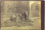 """""""Bobby"""" the dog, 1889"""