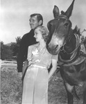 Clark Gable and wife Carole Lombard, and mule