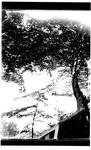 Unidentified park view, ca. 1900.