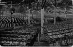The Tabernacle (Interior), Huntington, W.Va.