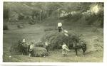 The Rockcamp farm, Cam Henderson on top of hay wagon, ca. 1911