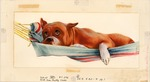 Boxer in hammock
