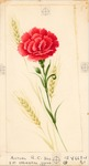 Carnation with wheat stalks
