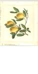 Lemon calendar page