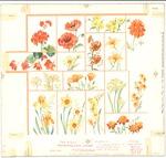 Orange and yellow flower panels