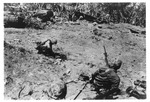 WWII Pacific Theater, combat photo: US Marines attacking a Japenese position by Earl F. Dickinson