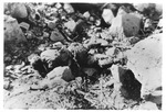 WWII Pacific Theater, combat photo: dead Japanese soldier by Earl F. Dickinson