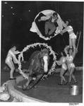 Horse act, Circus at Memorial Field House, Huntington,WVa