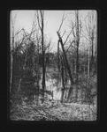 View from Camden Interstate Railway, near Bush's Stop, 1906