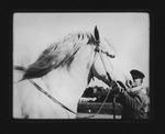 Horse from Germany at Huntington Racetrack, Huntington, ca 1906