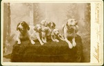 Unidentified group of dogs and puppies