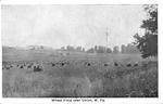 Wheat field near Union, Monroe County,W.Va.