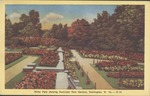 Ritter Park rose garden, Huntington, W.Va.