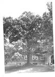 Marshall Beech Tree and Old Main