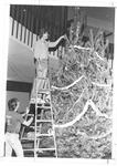 Senior Jerry Phillips decorating Xmas tree at MU Student Center, 1980