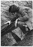 MU student Richard Coulter examines salamander eggs in Wayne County, Apr. 1975