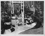 Huntington Women's Club Christmas Party , Dec. 1955